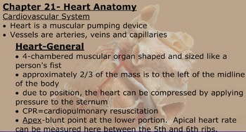 Cardiovascular Anatomy