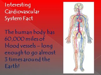 Cardiovascular System Notes - Blood Vessels Powerpoint Presentation