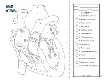 Cardiovascular & Respiratory System Coloring