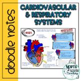 Cardiovascular & Respiratory System Doodle Notes