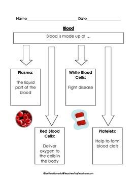 Paraphrasing graphic organizer of circulatory system