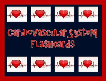 Cardiovascular System Flashcards