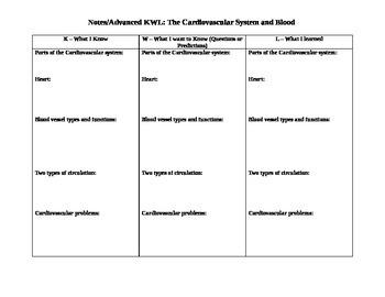 Cardiovascular System Graphic Organizer