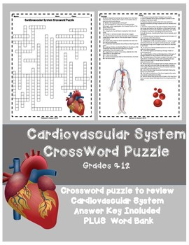 Cardiovascular System HS Crossword Puzzle