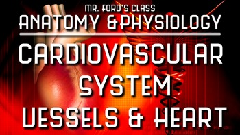 Cardiovascular System Heart and Blood Vessels: Anatomy and Physiology