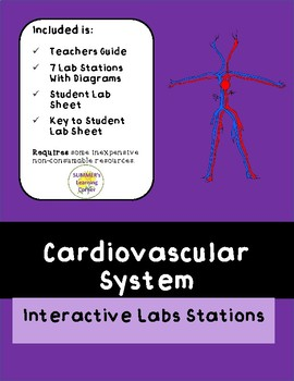 Cardiovascular System Interactive Stations Lab