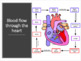 Cardiovascular System Powerpoint Notes