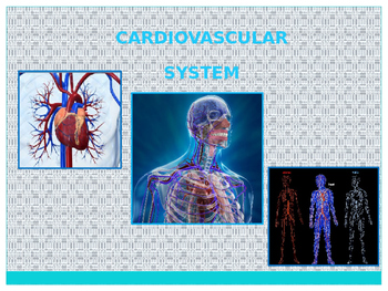 Cardiovascular System Overview Powerpoint