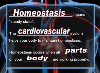 Cardiovascular System PowerPoint with Cloze Notes