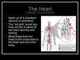 Cardiovascular System Powerpoint