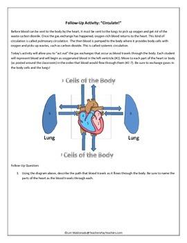 Cardiovascular System: The Body's Transport System