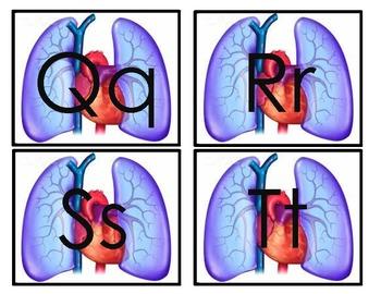 Cardiovascular System Word Wall!