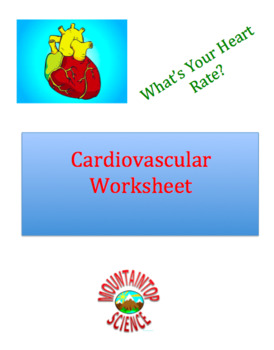 Cardiovascular System Worksheet