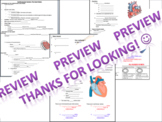 Cardiovascular system powerpoint with fill-in-the-blank notes