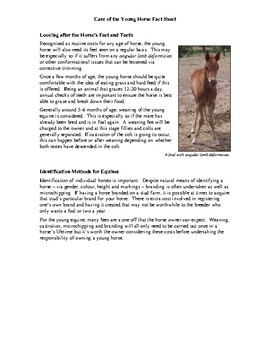 Care of the Young Horse Fact Sheet