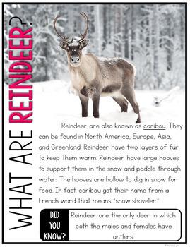 Caribou {Reindeer} Nonfiction Unit