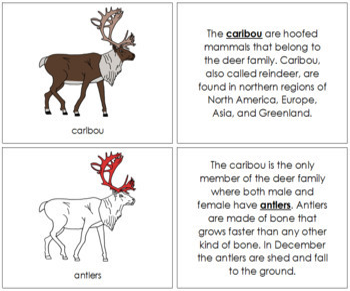 Caribou Nomenclature Book (Red)