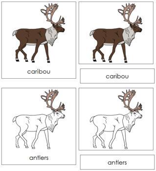Caribou Nomenclature Cards
