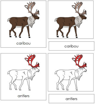 Caribou Nomenclature Cards (Red)