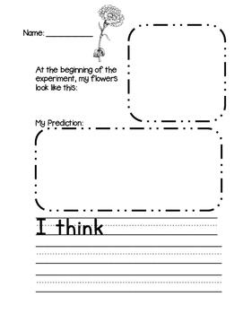 Carnation Experiment Printables