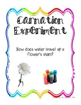 Carnation Science Experiment: The Study of How Water Travels Up a Stem