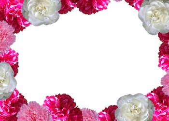 Carnations All Around Card and Clipart