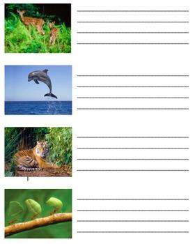 Carnivore Herbivore Omnivore and Habitats