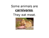 Carnivore, Herbivore, and Omnivore Sorting