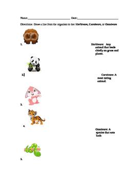 Carnivore, Omnivore, Herbivore