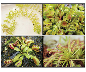 Carnivorous Plant Lapbook, Unit, and Resources