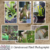 Carnivorous Plant Photographs