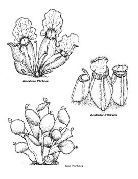 carnivorous plants coloring pages | Carnivorous plants Colouring or Light table by The Savvy ...