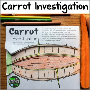 Carrot Investigation