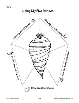 Carrot Nibbles: Using My Five Senses