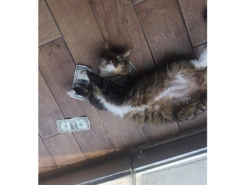 Cashnip Kitty: a real-life story for Spanish classes