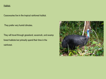 Cassowary - bird power point information facts pictures endangered