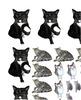 Cat Borders & Clip Art from Real Photos (CU OK)