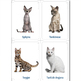 Cat Breeds. Cards and Facts