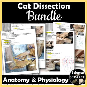 Cat Dissection Bundle