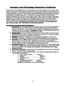 Cat Dissection Guidelines and Project