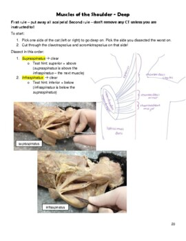 Cat Dissection Packet