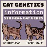 Cat Genetics Informational Page