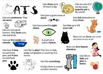 Cat Information Report Visual