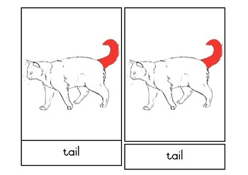 Cat Nomenclature