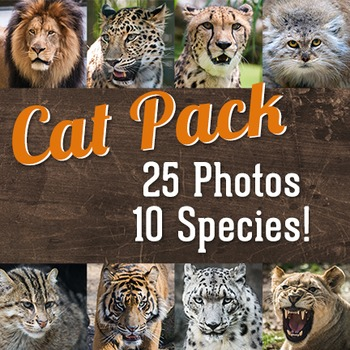 Cat Variety Pack