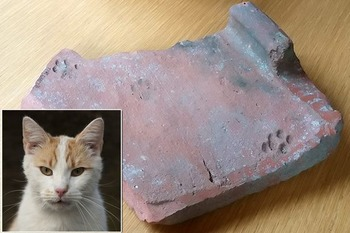 Cat on a Roman Roof Story