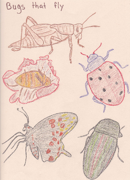 Categories: Bugs that fly