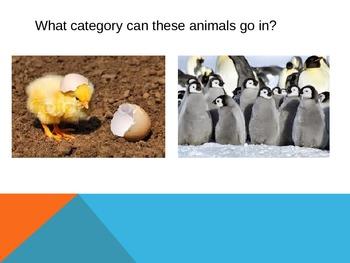Categorize Animals