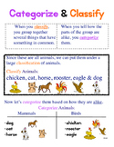 Categorize & Classify Anchor Chart