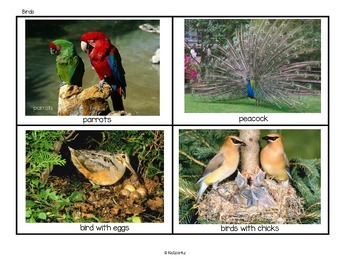 Categorizing 6 Animal Classes - Mammals Birds Insects Fish Reptiles & Amphibians